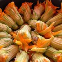 Courgettes fleur 6