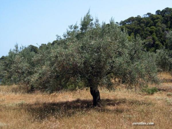 olivier-1.jpg