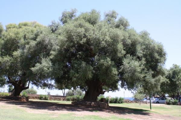 olivier-millenaire-italie