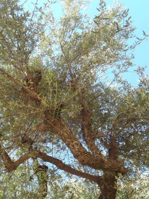 olivier-sauvage-01.jpg