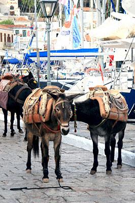 Taxi de l'île d'Hydra-Golfe Saronique-Grèce