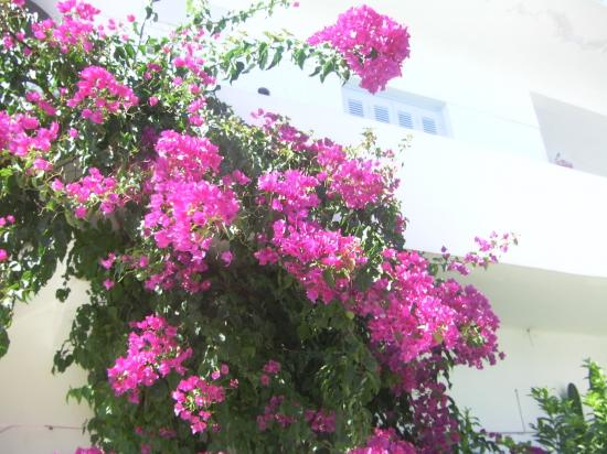 image de Grèce