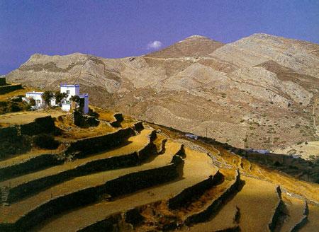 Champs en terrasses à Syros
