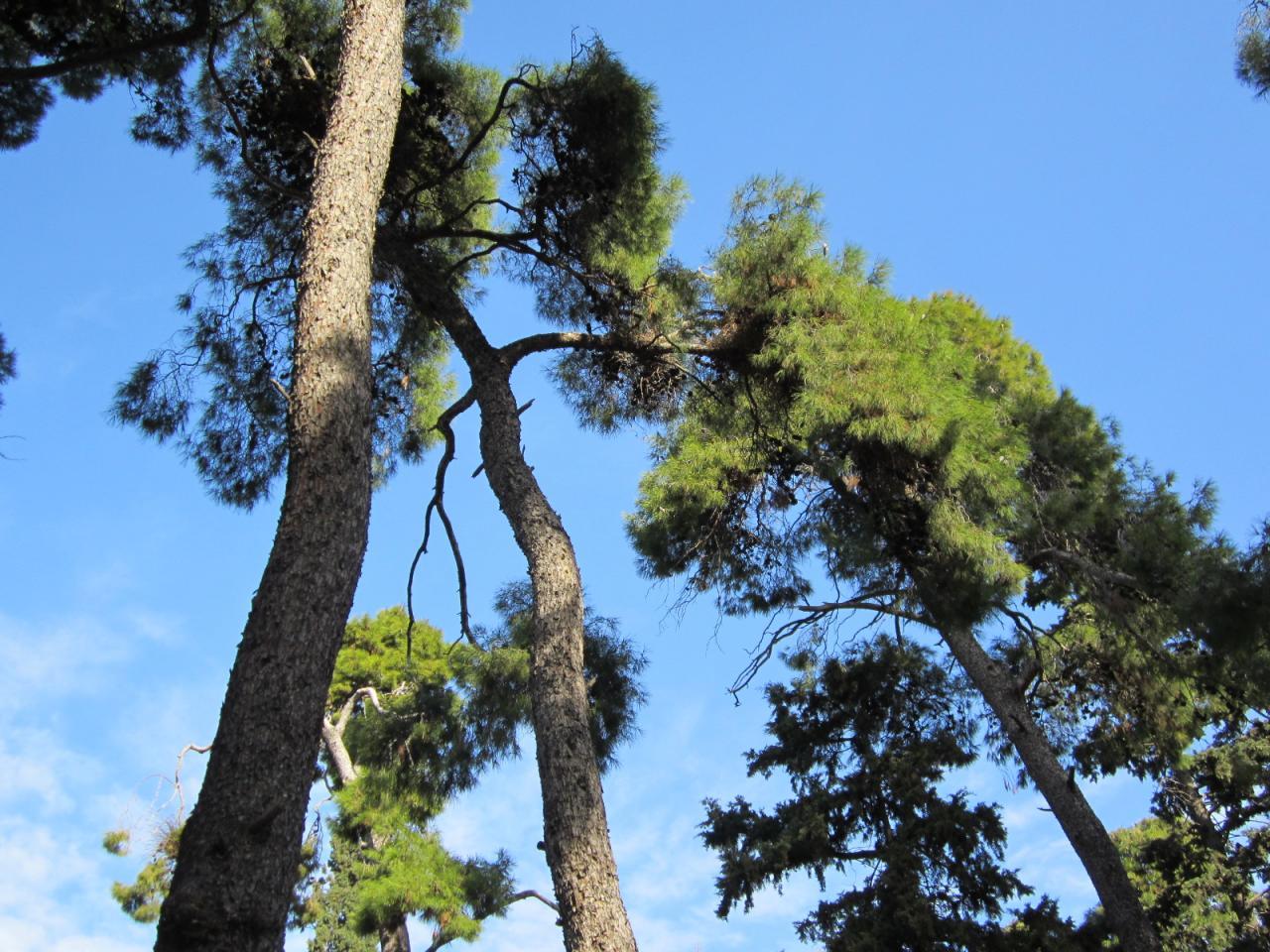 Jardin National-IMG_0760-© copyright Grèce Vacances