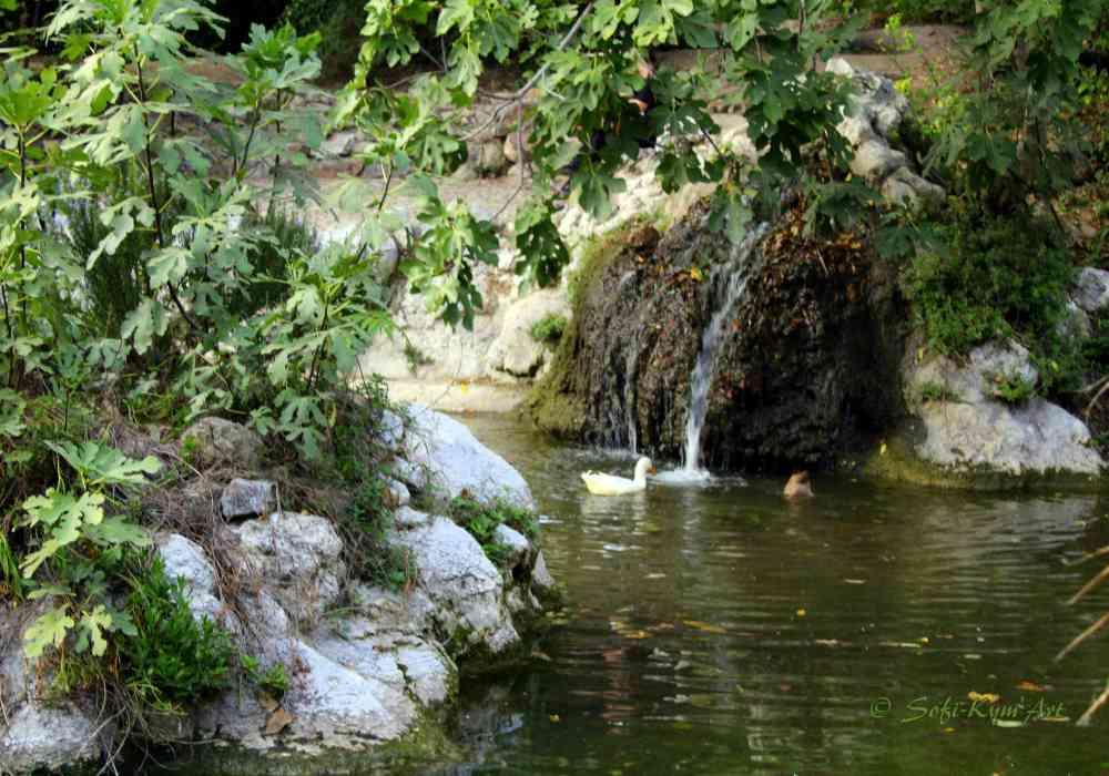 Jardin national-IMG_1687