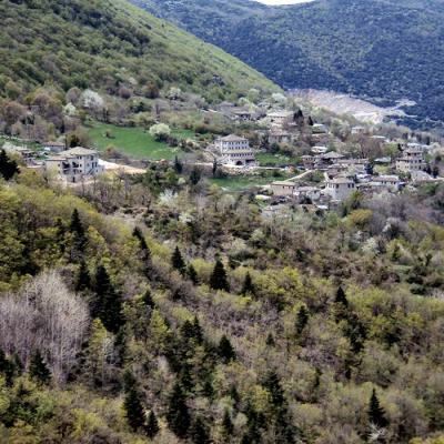 Zagori -Elati-IMG_1030